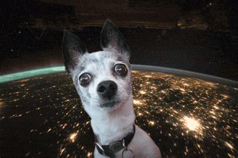 imagenes gif graciosas para facebook viernes de gifs edici 243 n animales humor v 237 deos fotos