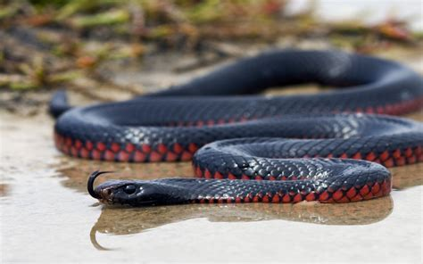 wallpaper black mamba snake black mamba snake wallpaper black mamba hd images new