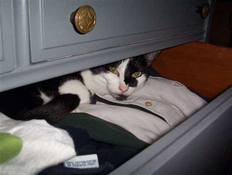 Cats Closet by 25 Pictures Of Cats Hiding We Rule The
