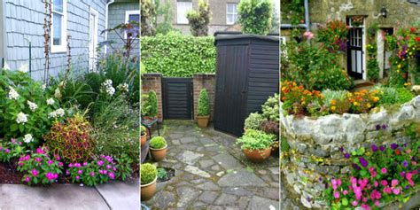 piante da fiore da giardino piante da giardino i nostri consigli roba da donne