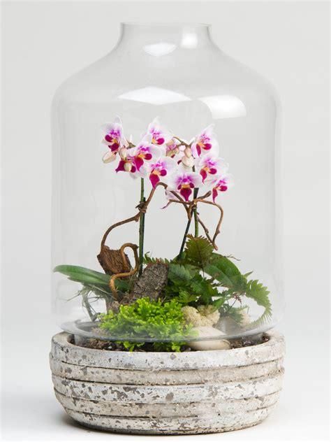 orchid terrarium plants robertson s flowers