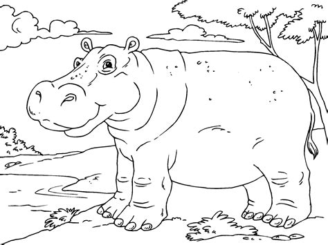 hippo coloring page free printable hippo coloring pages for