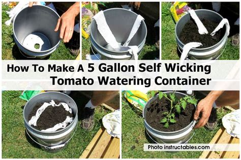 how to build container garden how to make a 5 gallon self wicking tomato watering container