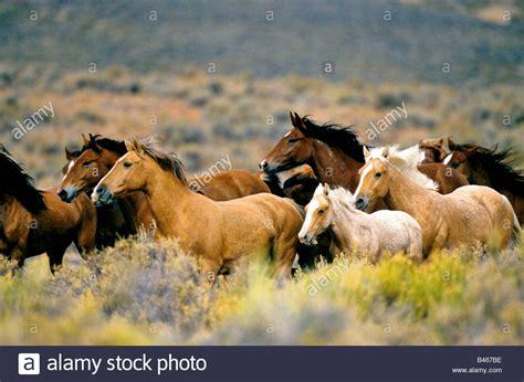 mustang running mustang horses running pixshark com images