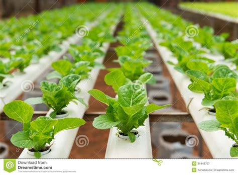 Modern Row House Plans - hydroponic vegetable royalty free stock photography image 31448707