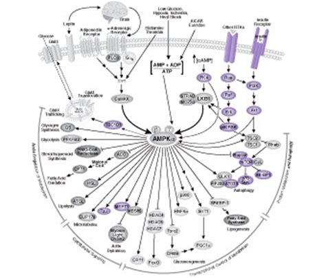 PTMScan Direct Multi-Pathway Proteomic Service   CST G Protein Coupled Receptors Pathway