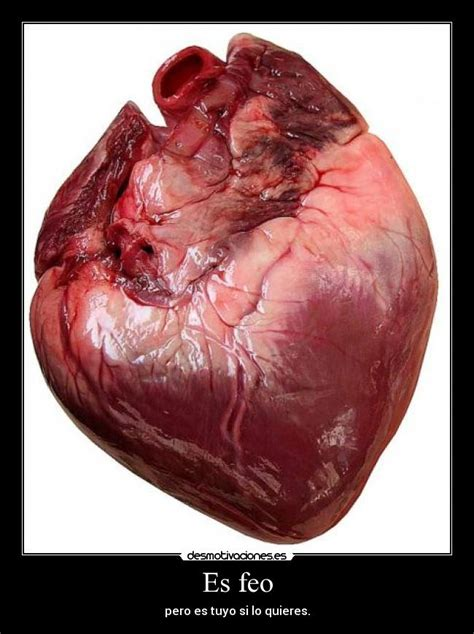 imagenes de corazones feos im 225 genes y carteles de corzon desmotivaciones