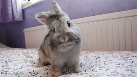 rabbit beds how to rabbit proof your home stop your rabbit chewing wires furniture carpet