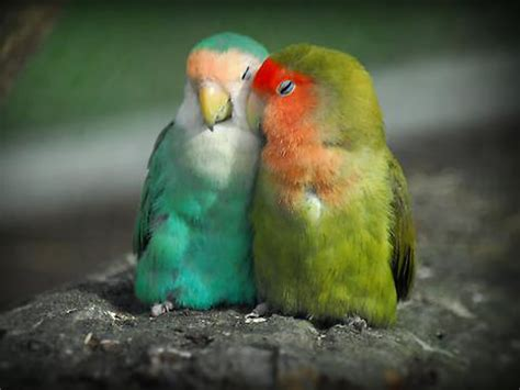 imagenes de love birds quotes about love and birds quotesgram