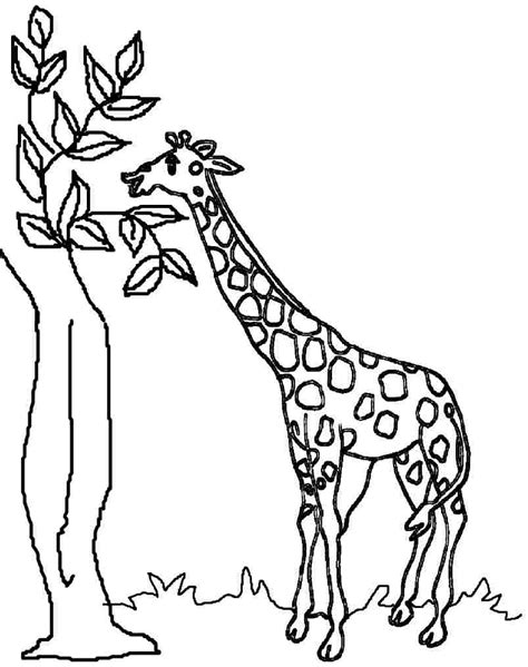 giraffe eating coloring pages top 11 free printable giraffe coloring pages for kids