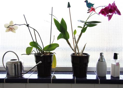 bathroom plants top  varieties bob vila