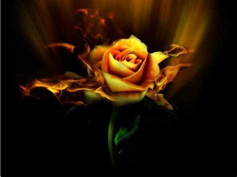 fiori fantastici fiori fantastici foto sfondi per desktop 10510