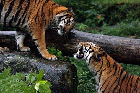 Taman Safari Cisarua taman safari indonesia cisarua bogor info destinasi wisata