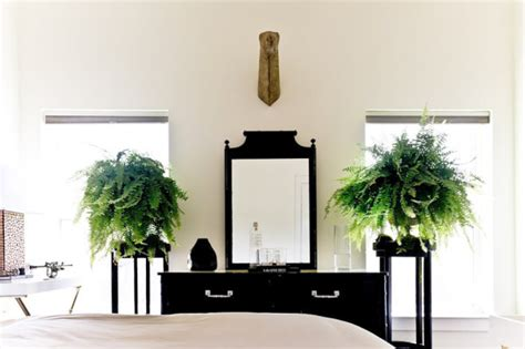 fern decor choosing the best indoor plants for your interior