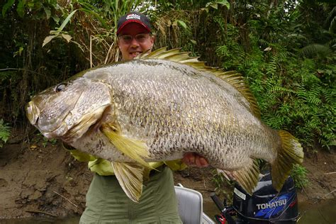 bass boat in brackish water papua new guinea baddest bass on earth words and images