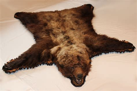 grizzly skin rug grizzly rugs for sale rugs ideas