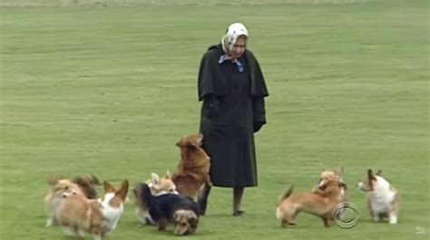how many corgis does the queen have a glimpse inside the pered life of the queen s dogs