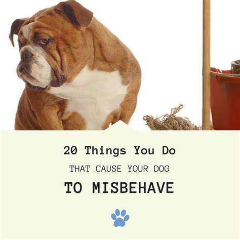 15 things not to do with a puppy books 20 things you do that cause your to misbehave page