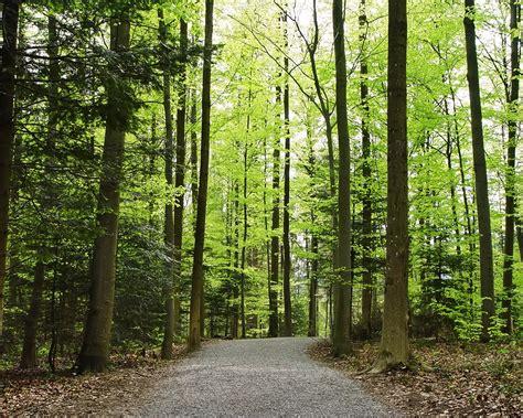 jalan  hutan wallpaper pemandangan alam alam wallpaper