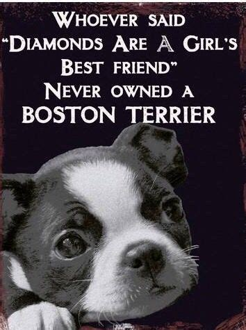Boston Terrier Meme - 7798 best dogs puppies family images on pinterest