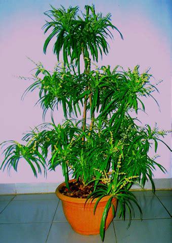 gambar tanaman bunga tanamanbungacom