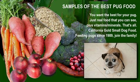best food for pugs with allergies the best pug food