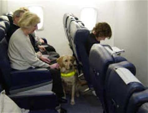 United Airlines Pets In Cabin by Traveling With A Service Guidelines And