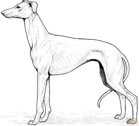 Dog Coloring Page Download   Free Download Dogs Coloring