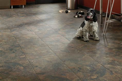 best carpet for bedrooms with dogs piso apto para mascotas residential
