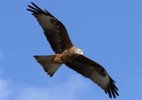 witness the majestic birds of prey with over 250 species