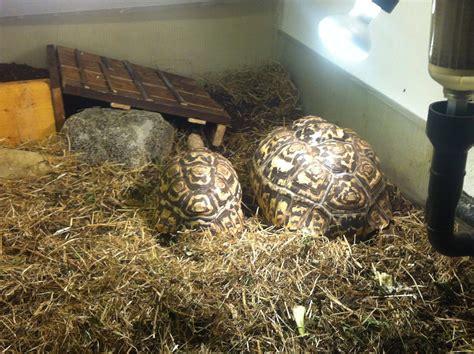 terrario per tartarughe di terra giardino terrario fai da te per tartarughe di terra