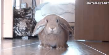 Bathroom Bunny Gif The 33 Most Important Bunny Gifs On The
