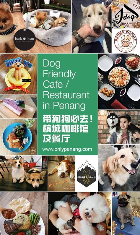 restaurants that allow dogs friendly cafe and restaurant in penang onlypenang