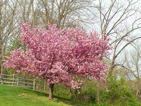 15 fruitful and flowery trees that grow great in