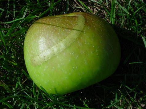 apple europe plant doctor fruit trees