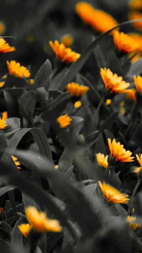 black  orange wallpaper  images