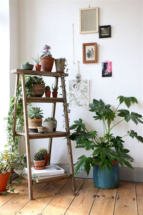 plants for decorating home best 25 indoor plant decor ideas on pinterest plant