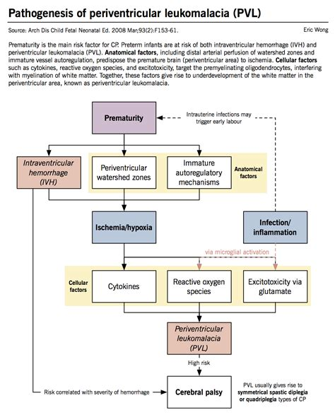 Pathophysiology Of Syphilis In Diagram