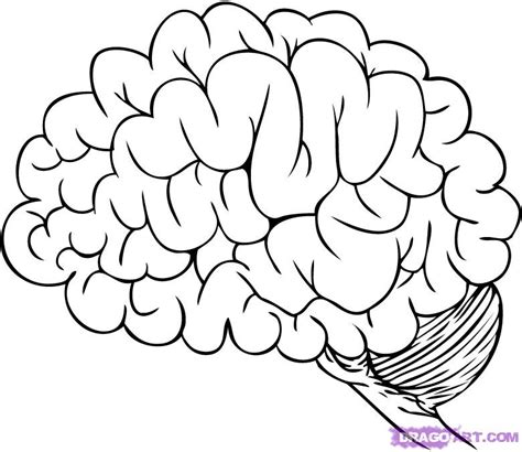 coloring page brain human brain coloring pages az coloring pages