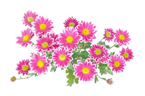 flowers and plants free illustration flowers flower plants nature free