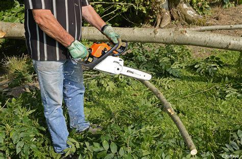 Abattre Un Arbre Dans Son Jardin