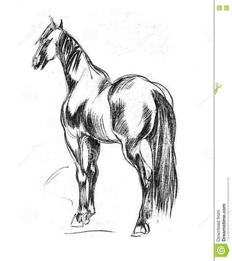 draw horse illustrator beautiful pencil sketches of horses drawing art ideas