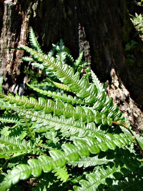 where the fern grows names where the green fern grows