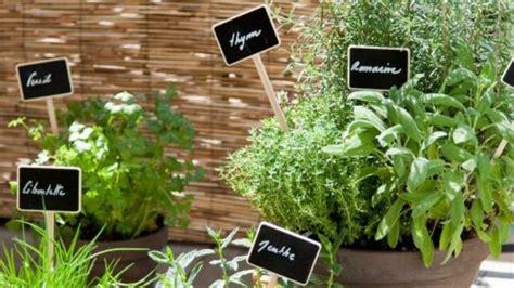 comment planter des plantes aromatiques sur balcon c 244 t 233 maison