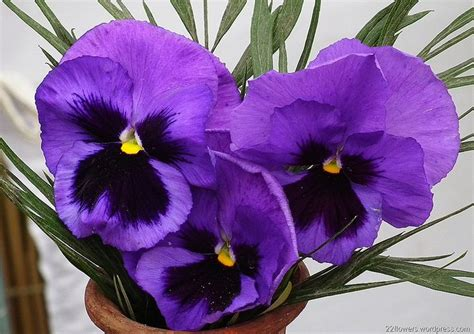 types of purple types of purple flowers pictures to pin on pinterest