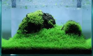 Aquascape Wallpaper ᐅ Aquascaping Naturaquarium Und Aquariengestaltung