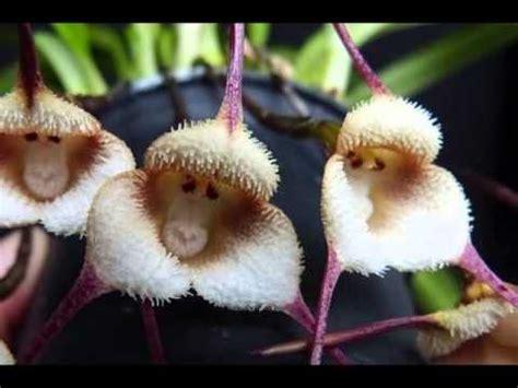 Imagenes Hermosas Sorprendentes | 10 flores sorprendentes que no son lo que parecen youtube