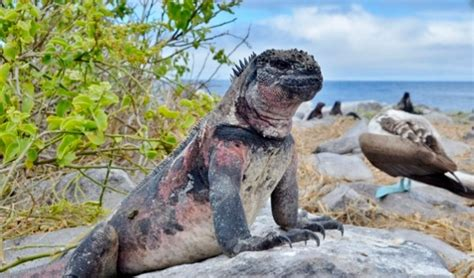7 Amazing Animals From The Galapagos Islands by Learn About The Unique Wildlife Of The Galapagos Islands