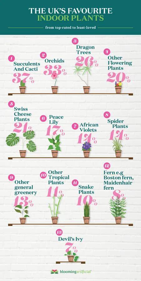 indoor plant  pot trends      images