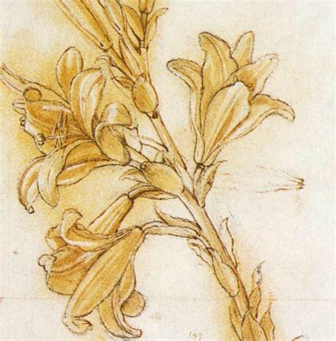 da vinci häuser leonardo da vinci dibujo de un lili azucena